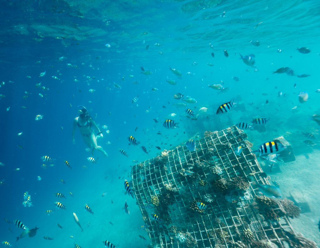 lombok snorkelling tour to the sw gilis