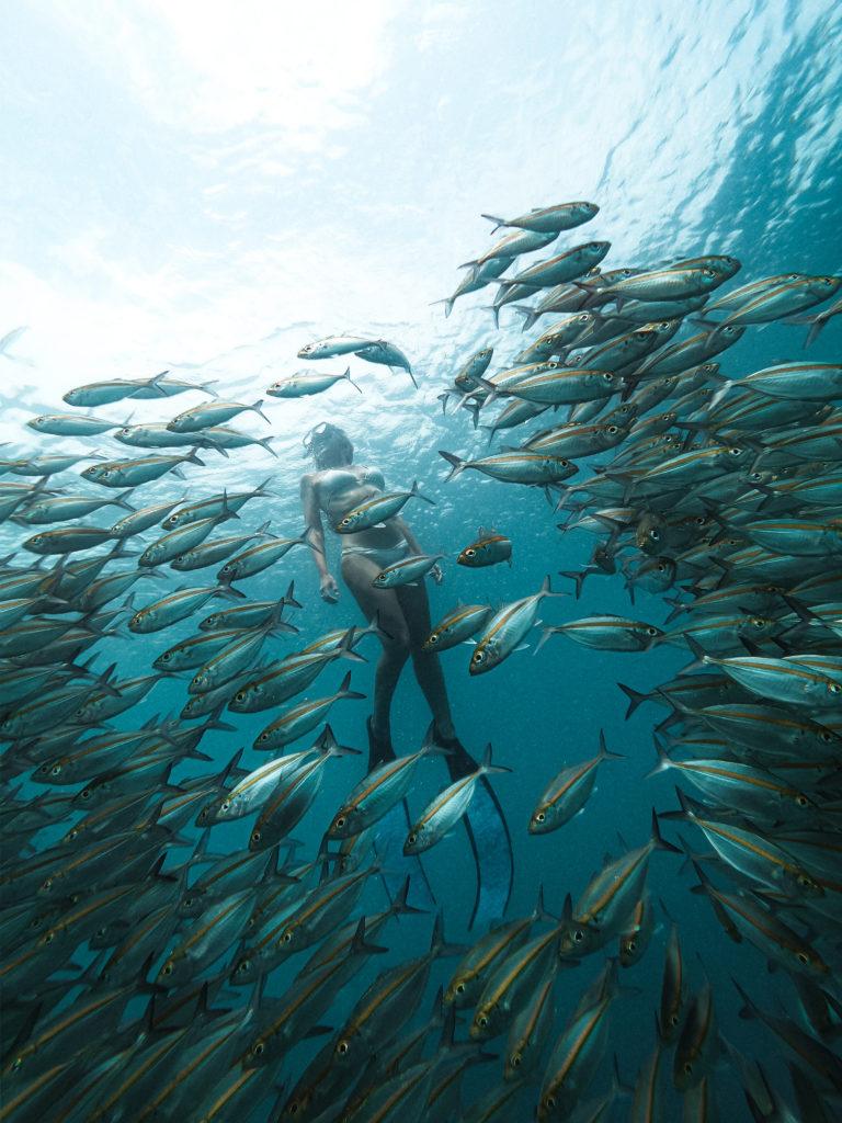 swim amongst schools of fish Gili Nanggu