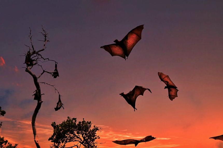 bats at sunset in Komodo national park